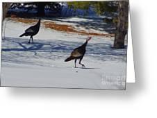 Turkey Walk Greeting Card by Eric Menk