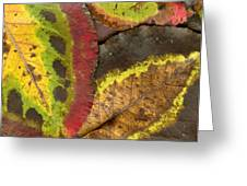 Turning Leaves 2 Greeting Card by Stephen Anderson