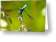 Turquoise Dragonfly Greeting Card by Lorri Crossno