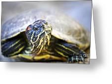 Turtle Greeting Card by Elena Elisseeva