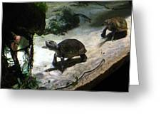Turtle - National Aquarium In Baltimore Md - 121218 Greeting Card by DC Photographer