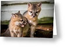 Twin Fox Kits Greeting Card by Paul Freidlund