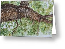 Twisted Maple Greeting Card by Patsy Sharpe