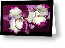 Two Baby Orchids Greeting Card by Phyllis Denton