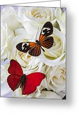Two Butterflies On White Roses Greeting Card by Garry Gay