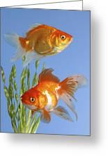 Two Fish Fs101 Greeting Card by Greg Cuddiford