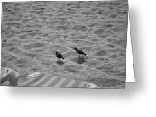 Two Little Birds On The Beach Greeting Card by Shaun Maclellan