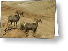 Two Male Rams At Zion Greeting Card by Jeff Swan
