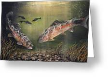 Two Rainbow Trout Greeting Card by Donna Tucker