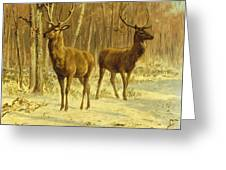 Two Stags In A Clearing In Winter Greeting Card by Rosa Bonheur