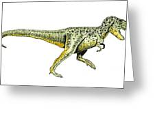 Tyrannosaurus Rex Greeting Card by Michael Vigliotti