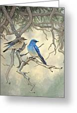 Under The Old Juniper-mountain Bluebirds Greeting Card by Paul Krapf