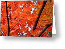 Under The Orange Maple Tree Greeting Card by Rona Black