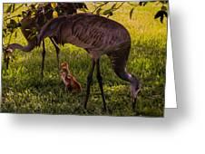 Under The Orange Tree Greeting Card by Zina Stromberg
