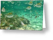 Under The Sea Greeting Card by Peggy J Hughes