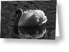 Unfolding Wings  Swan Of Light Greeting Card by Pamela Phelps