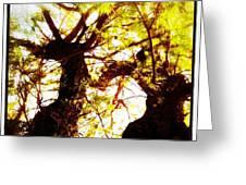 Untitled-twin Trees Greeting Card by Juliann Sweet