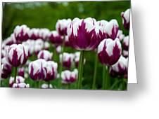 Unusual Tulips Greeting Card by Jennifer Lyon