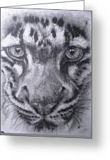 Up Close Clouded Leopard Greeting Card by Barbara Keith