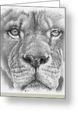 Up Close Lion Greeting Card by Barbara Keith