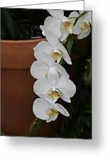 Us Botanic Garden - 12126 Greeting Card by DC Photographer