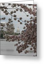 Us Capitol - Cherry Blossoms - Washington Dc - 01132 Greeting Card by DC Photographer