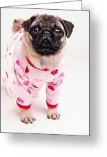 Valentine's Day - Adorable Pug Puppy In Pajamas Greeting Card by Edward Fielding