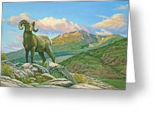 Vantage Point - Bighorn Greeting Card by Paul Krapf