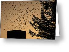 Vaux's Swifts In Migration Greeting Card by Garry Gay