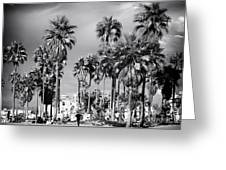 Venice Beach Palms Greeting Card by John Rizzuto