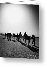 vertical hot sun beating down on sands and camel train in the sahara desert at Douz Tunisia Greeting Card by Joe Fox