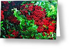 Very Berry Greeting Card by Kaye Menner