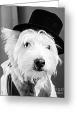 Veteran Vaudeville Stage Actor Greeting Card by Edward Fielding