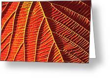Vibrant Viburnum Greeting Card by Bill Caldwell -        ABeautifulSky Photography