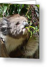 Victorian Koala Snacktime Greeting Card by Margaret Saheed