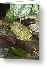 Vietnamese Mossy Frog Greeting Card by Sara  Raber