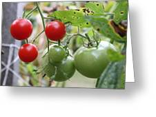 Vine Ripe Tomatoes Greeting Card by Carla  Kutt