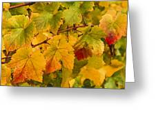 Vineyard Art Greeting Card by Jean Noren