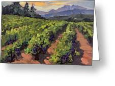 Vineyard At Dentelles Greeting Card by Diane McClary