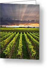 Vineyard At Sunset Greeting Card by Elena Elisseeva