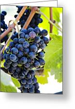 Vineyard Grapes Greeting Card by Charmian Vistaunet