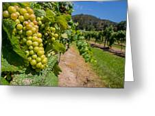 Vineyard Grapes Greeting Card by Justin Woodhouse