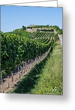 Vineyard In Rhineland Palatinate Greeting Card by Palatia Photo