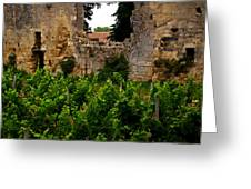 Vineyard In The Ruins Greeting Card by Christine Burdine
