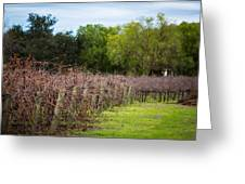 Vineyard In Winter Greeting Card by Mike Lee