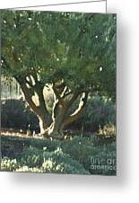 Vineyard Olive Greeting Card by Artist and Photographer Laura Wrede