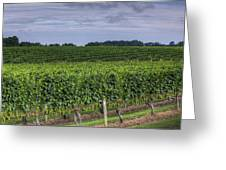Vineyard Rows Greeting Card by Steve Gravano