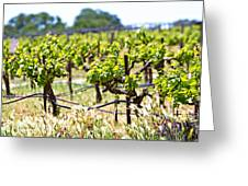 Vineyard With Young Plants Greeting Card by Susan  Schmitz