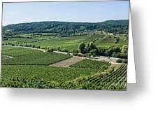 Vineyards In Rhineland Palatinate Greeting Card by Palatia Photo