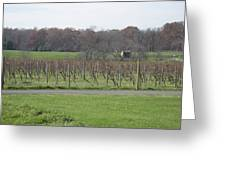 Vineyards In Va - 121234 Greeting Card by DC Photographer